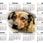 Cuidado mascotas 2018