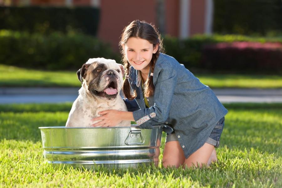 Antiparasitarios naturales perros y gatos