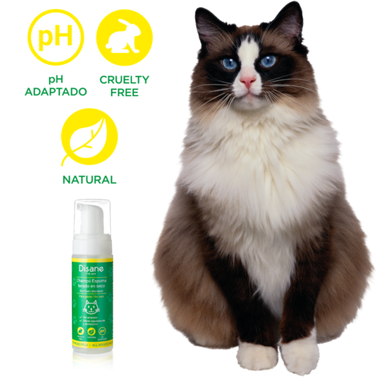 Natural Dry Foam Shampoo for Cats