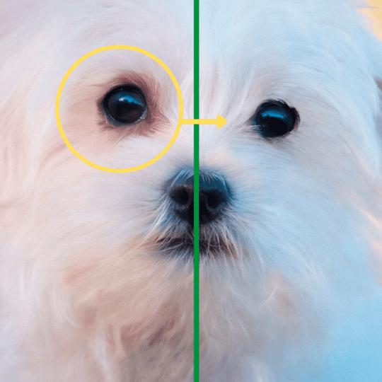Natural Dog Eye Cleaner
