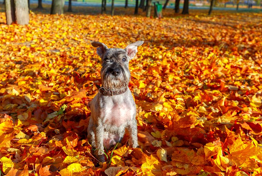 antiparasitarios otoño