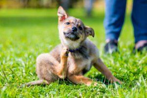 antipulgas perros