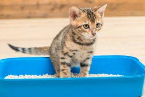 Cómo limpiar el arenero de tu gato