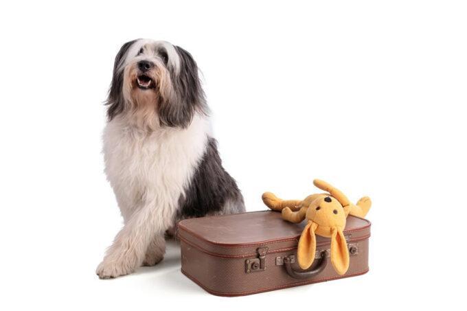 custodia de mascotas
