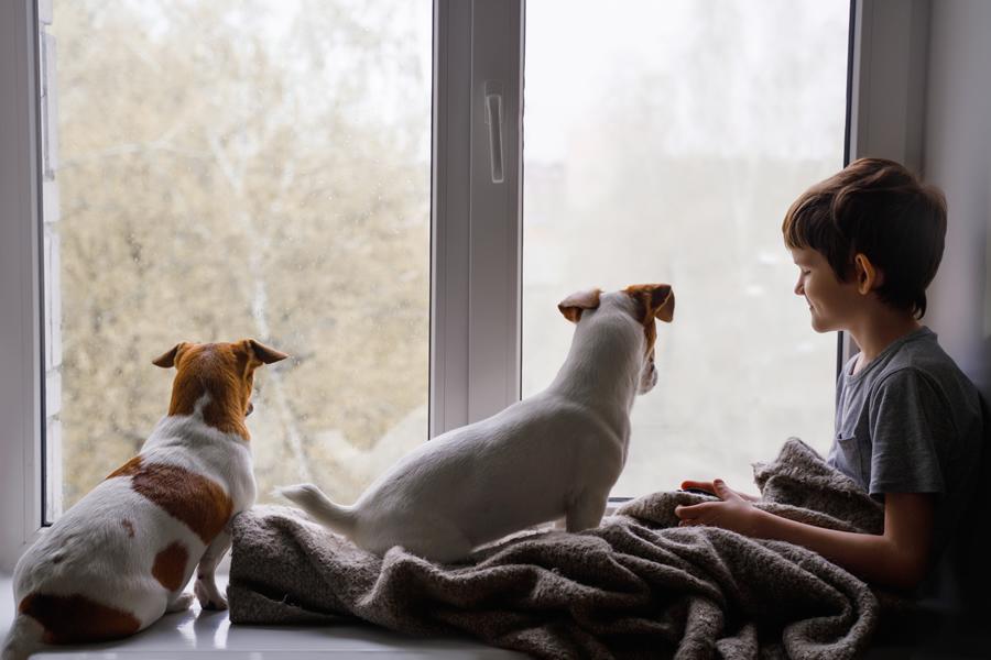 empapadores para perros