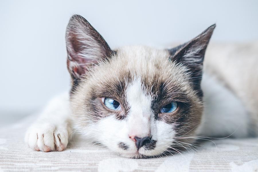 gato está triste