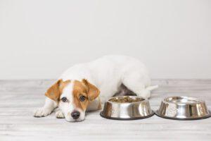 mi perro no come
