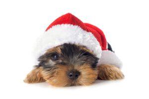 vacaciones con tu perro en Navidad