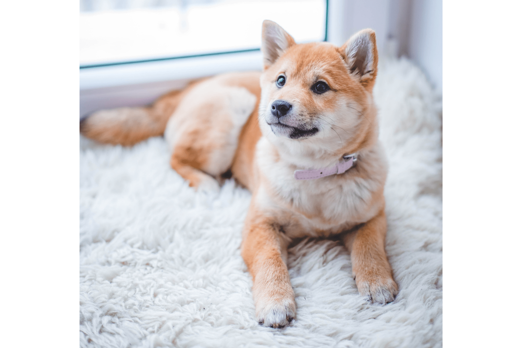 antiparasitarios naturales para perros y gatos en polvo, en spray, collares y pipetas