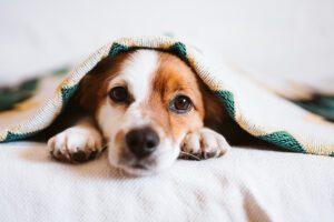 proteger a tu perro del frio